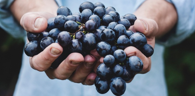grapes Maja Petric